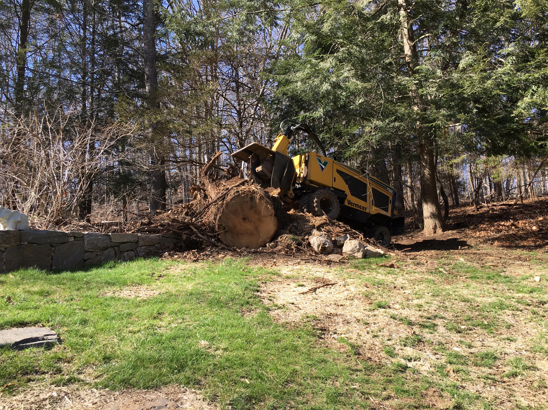 Stump in Easton, CT